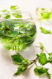 Nettle tea with glass pot  and cup  on white wooden background Royalty Free Stock Image