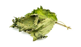 Nettle tea leaf Stock Photo