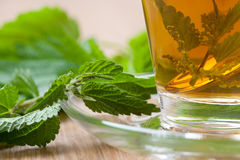 Nettle tea with stinging nettle inside teacup Royalty Free Stock Image