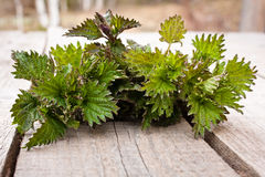 Nettle on the wooden table Royalty Free Stock Photos