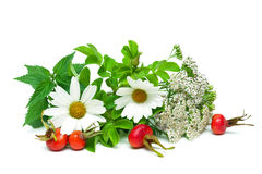 Nettle, yarrow and berries of wild rose isolated on white backgr Royalty Free Stock Photo