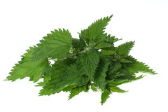 Nettles. Clmp of nettles Roman studio Royalty Free Stock Images