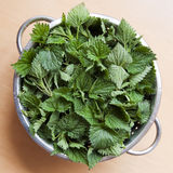 Nettles. Fresh nettles in colander ready for cooking royalty free stock photo