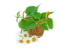 Nettles in a basket and daisy flowers on a white background Stock Image