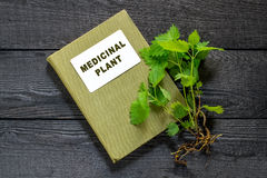 Nettles and directory medicinal plant. Medicinal plant nettle (Urtica dioica) and herbalist handbook on the old wooden table. It is used in food preparation and Royalty Free Stock Image
