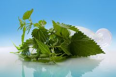 Nettles in the glass. Front of a blue background stock photos