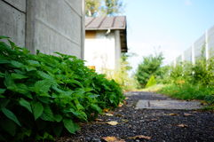 Nettles Royalty Free Stock Photography
