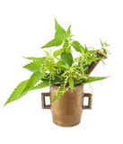 Nettles in a mortar Stock Photography