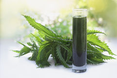 Nettles and a smoothie made of nettles juice in  a glass Royalty Free Stock Image