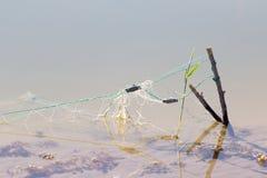 Netto in het water stock afbeelding