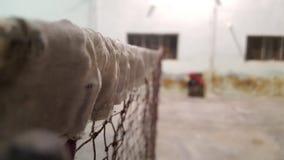 Netto horisontalsikt för badminton Arkivbilder