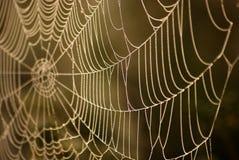 netto pająk Zdjęcia Royalty Free