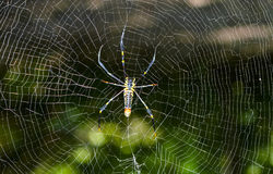 netto pająk obrazy stock