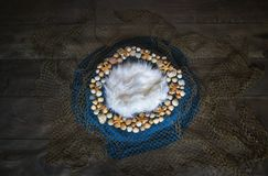 Netto vissen en digitale achtergrond van de zeeschelp de Pasgeboren fotografie pro stock fotografie