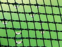Nettomuster mit Tautropfen lizenzfreie stockbilder