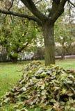 Nettoyage d'automne photos libres de droits