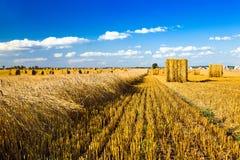 Nettoyage de blé Photos stock