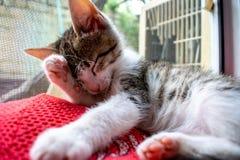 Nettoyage de chat lui-même Animal mignon photographie stock libre de droits