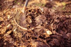 Nettoyage de ressort de jardin : étroit du râteau en acier recueillant une pile des feuilles et de l'herbe tombées sèches dans le photos libres de droits