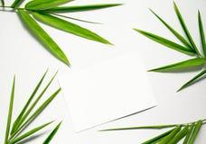 Nettoyez la configuration plate avec la feuille et la carte vertes Feuille en bambou et papier blanc sur le fond blanc Image stock