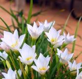 Nettoyez la fleur 02 Photographie stock