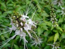 Nettoyez la fleur photo libre de droits