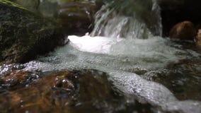 Nettoyez la rivière dans la forêt antique, Roumanie Détail 2 banque de vidéos