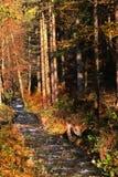 Nettoyez la rivière de forêt Photos libres de droits