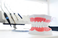 Nettoyez le dentier de dents, modèle dentaire de mâchoire dans le bureau du dentiste images libres de droits