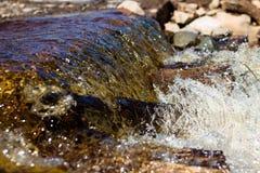 Nettoyez les écoulements d'eau de rivière au-dessus des pierres et les enveloppez photographie stock libre de droits