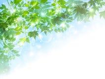 Nettoyez les illustrations vertes fraîches de fond Images libres de droits