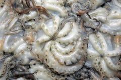 Nettoyez les poulpes Photo libre de droits