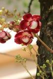 Netural beauti in Bangladesh flower. Netural beauti bangladesh flower beautiful stock images