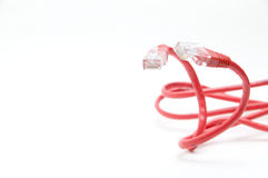 The network cable Stock Photography