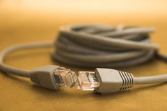 Network cable. On gold background Stock Photos