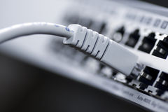 Network cable connected to a switch Royalty Free Stock Image