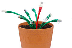 Network cable in flowerpot. Network cables in a flowerpot. symbolic of broadband and internet development stock image