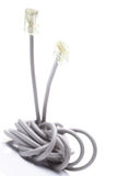 Network cable on white background Stock Image