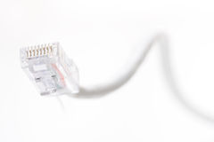 Network cable on white background Royalty Free Stock Photography