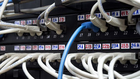 Network cables. Connected to switches in a datacenter stock photography