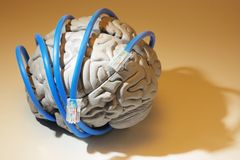 Network Cables Around Brain Royalty Free Stock Photography