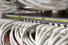 Network Cables Connected in Switch Royalty Free Stock Images
