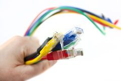 Network cables in hand Stock Image