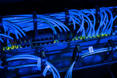 Network cables in switch Royalty Free Stock Photo