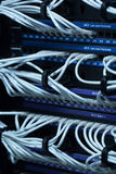 Network Hub and  Patch Cables Stock Photography