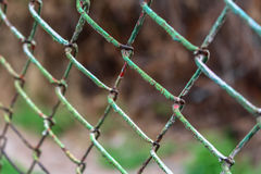 Network. Iron trellis lattice grating toils Stock Photo