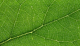 Network of nature Stock Photography
