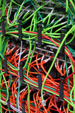 Network Patch Cables Royalty Free Stock Images