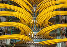 Network Patch panel in a data center.  Royalty Free Stock Image