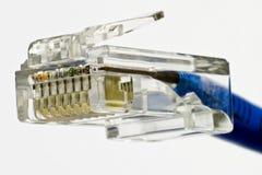 Network plug Stock Image